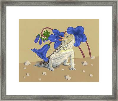 Coast Horned Lizard Framed Print by Nathan Marcy