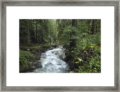 Coast Redwood Forest Big Sur California Framed Print by Sebastian Kennerknecht
