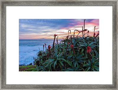 Coastal Aloes Framed Print