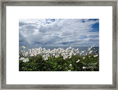 Coastal Backlit Anemones Framed Print
