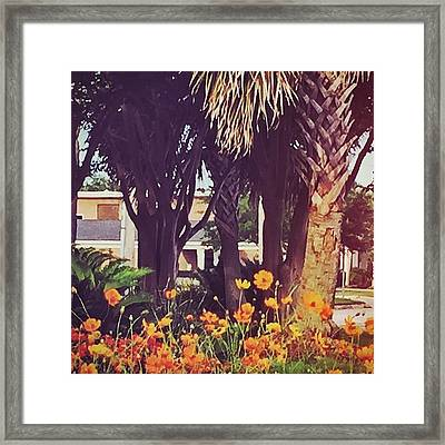 Coastal Beauty #art #msgulfcoast Framed Print