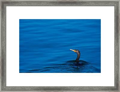 Coastal Cormorant Framed Print by Karol Livote