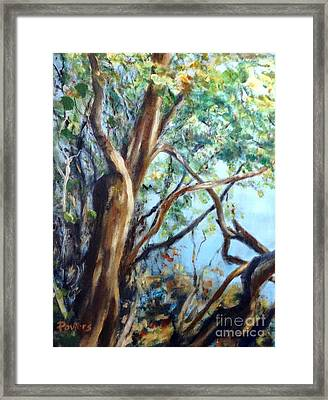 Coastal Forest Framed Print