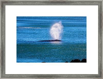 Coastal Gray Whale Framed Print by Garry Gay