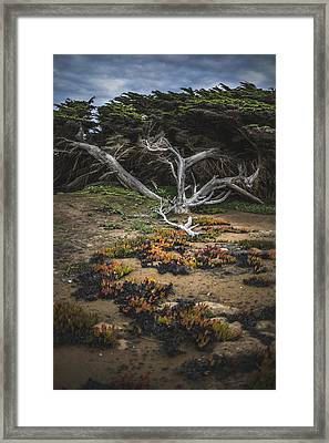 Coastal Guardian Framed Print