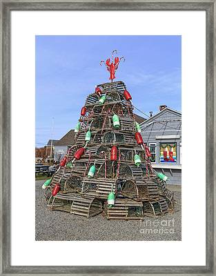 Coastal Maine Christmas Tree Framed Print by Edward Fielding