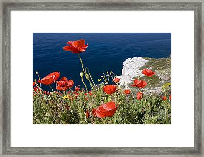 Coastal Poppies Framed Print