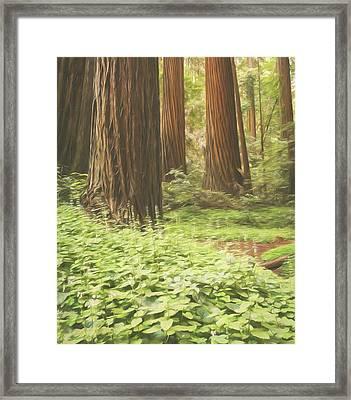 Coastal Redwood Giants Framed Print