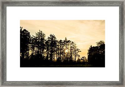 Coastal Trees Framed Print