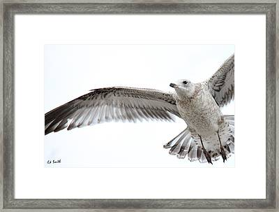 Coasting Framed Print by Ed Smith