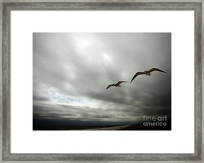 Coasting Framed Print by Leslie Coston