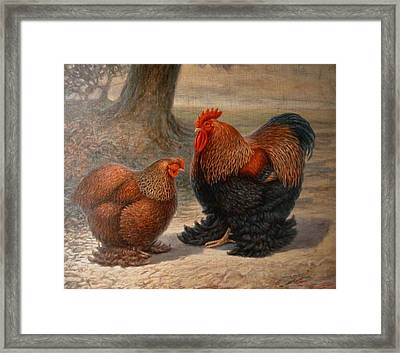 Cochin Chickens Framed Print by Hans Droog