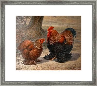Cochin Chickens Framed Print