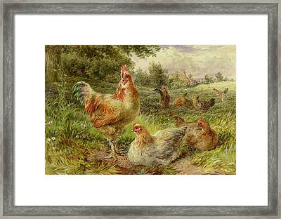 Cochin China Fowls Framed Print by George Hickin