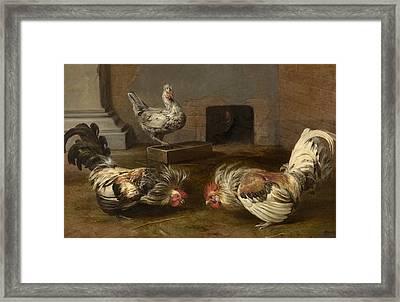 Cock Fight Framed Print