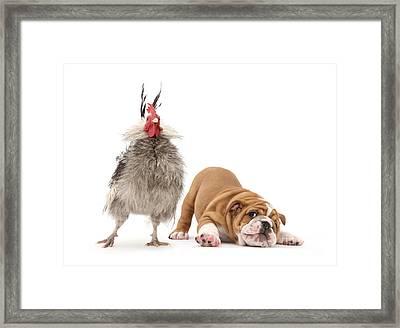 Cock N Bull Framed Print