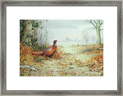 Cock Pheasant  Framed Print by Carl Donner
