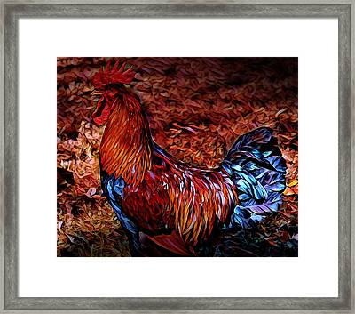 Cock Rooster Framed Print