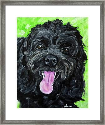 Cockapoo Painting Framed Print by Sun Sohovich