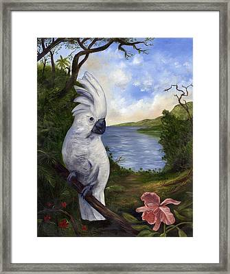 Cockatoo And Orchid Framed Print