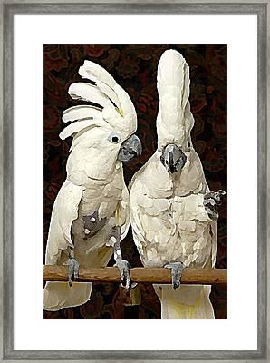 Cockatoo Conversation Framed Print