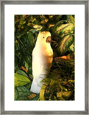 Framed Print featuring the photograph Cockatoo In Sunlight by Diane Merkle