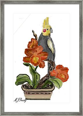 Cockatoo Framed Print by June Pressly