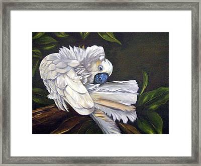 Cockatoo Preening Framed Print