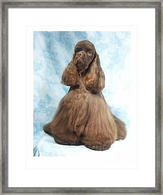 Cocker Spaniel 384 Framed Print by Larry Matthews
