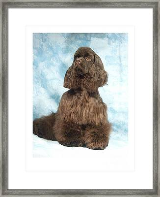 Cocker Spaniel 547 Framed Print by Larry Matthews