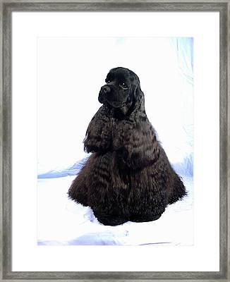 Cocker Spaniel 67 Framed Print by Larry Matthews