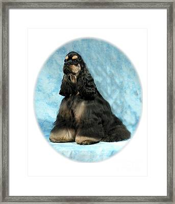 Cocker Spaniel 806b Framed Print by Larry Matthews