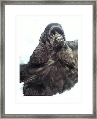 Cocker Spaniel 924 Framed Print by Larry Matthews