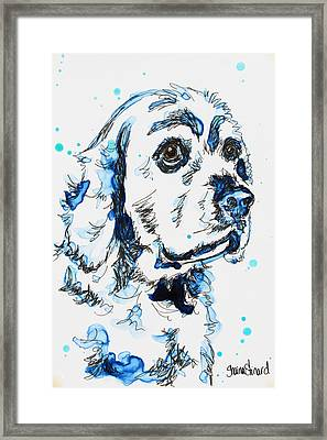 Cocker Spaniel In Blue Framed Print by Shaina Stinard