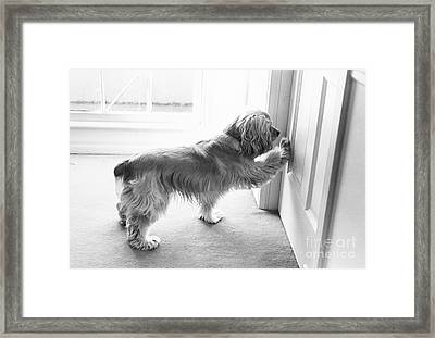 Cocker Spaniel Opening A Door Framed Print by Lynn Lennon