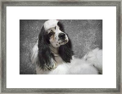 Cocker Spaniel Framed Print by Rebecca Cozart