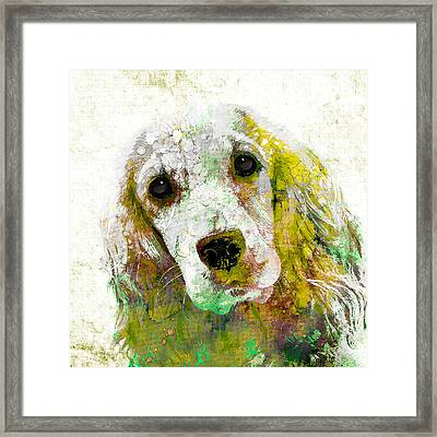 Cocker Spaniel Framed Print by Stacey Chiew