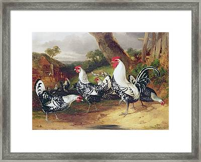 Cockerels In A Landscape Framed Print by William Joseph Shayer