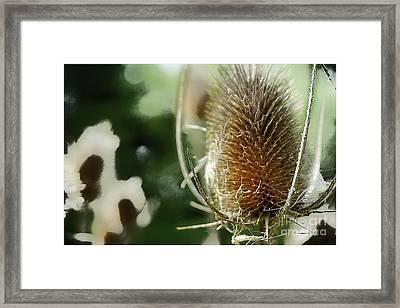 Cockle Bur Framed Print