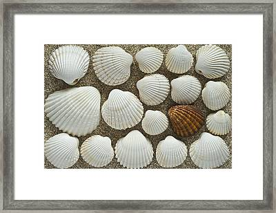 Cockles Collection Framed Print by Igor Voljch