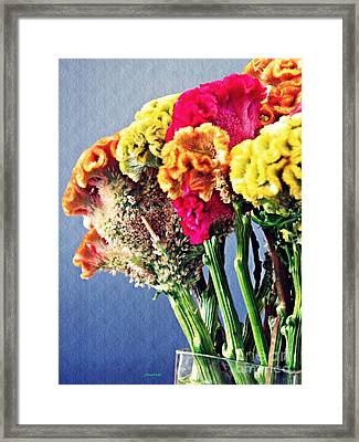 Framed Print featuring the photograph Cockscomb Bouquet 2 by Sarah Loft