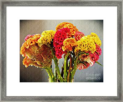 Framed Print featuring the photograph Cockscomb Bouquet 3 by Sarah Loft