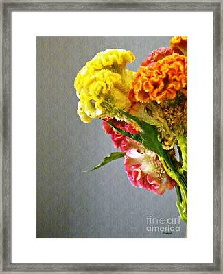 Framed Print featuring the photograph Cockscomb Bouquet 4 by Sarah Loft