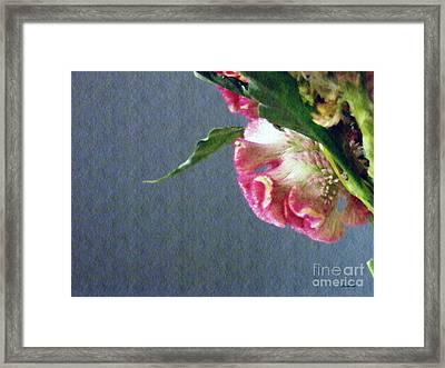 Cockscomb Bouquet 6 Framed Print