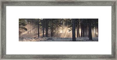 Coconino Dawn Framed Print