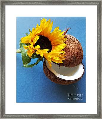 Coconut And Sunflower Harmony Framed Print by Jasna Gopic