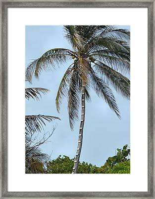 Coconut Collecting Framed Print by JAMART Photography