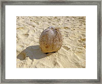 Framed Print featuring the photograph Coconut In The Sand by Francesca Mackenney