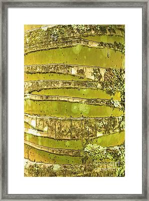 Coconut Palm Bark 1 Framed Print by Brandon Tabiolo - Printscapes