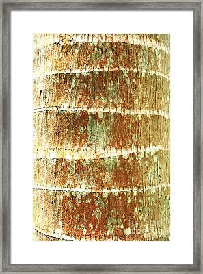 Coconut Palm Bark 2 Framed Print by Brandon Tabiolo - Printscapes